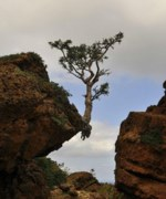 Célébration des défunts 2019 Bas Saguenay L'arbre force de la nature