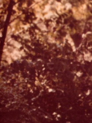 """Geraldine """"Geri"""" F.  Wancowicz"""
