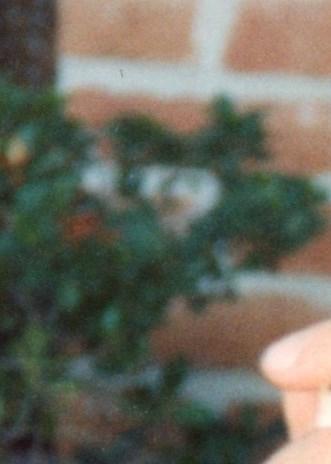Manuel Grijalva  Loya